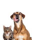 Gato e cão que lambem o close up dos bordos Imagens de Stock