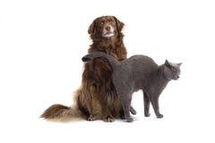 Gato e cão Foto de Stock Royalty Free