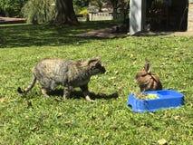 Gato e coelho junto Foto de Stock