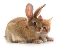 Gato e coelho vermelhos imagem de stock