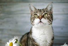 Gato e Daisy Flowers imagens de stock royalty free