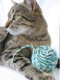 Gato e esfera Fotos de Stock Royalty Free