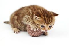Gato e esfera cinzenta de lãs Imagens de Stock