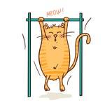 Gato e esporte ilustração do vetor