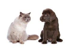 Gato e filhote de cachorro Foto de Stock