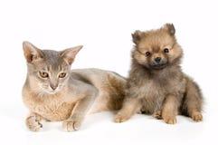 Gato e filhote de cachorro Fotografia de Stock