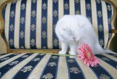 Gato e flor Foto de Stock Royalty Free