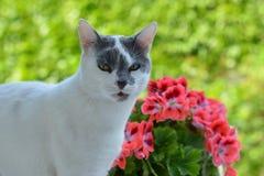 Gato e flores Fotografia de Stock