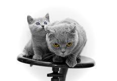 Gato e gatinho fotografia de stock
