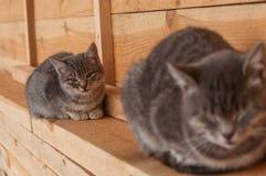Gato e gatinho Fotografia de Stock Royalty Free