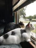 Gato e gatinho da mamãe imagens de stock