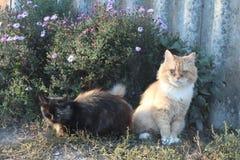 Gato e gato Imagens de Stock