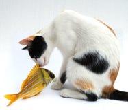 Gato e goldfish Foto de Stock