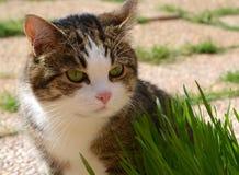 Gato e hierba verde Fotos de archivo libres de regalías