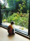 gato e jardim Fotos de Stock
