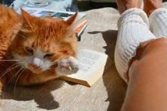 Gato e livro Foto de Stock Royalty Free