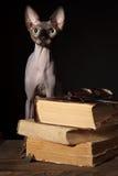 Gato e livros de Sphynx imagem de stock royalty free