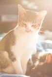 Gato e luz do alargamento Imagem de Stock Royalty Free