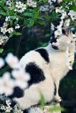 Gato e mola Fotos de Stock