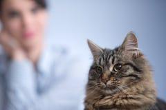 Gato e mulher Fotografia de Stock