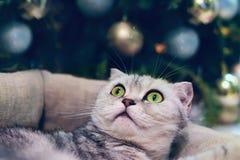 Gato e Natal, uma árvore de Natal com luzes Fotos de Stock Royalty Free