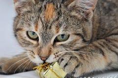 Gato e o presente Fotos de Stock Royalty Free