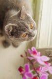 Gato e orquídea cor-de-rosa Fotografia de Stock