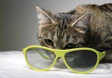 Gato e os vidros 3d Fotos de Stock Royalty Free