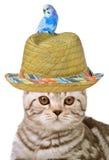 Gato e pássaro Fotos de Stock Royalty Free