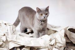 Gato e papel dobrado fotos de stock