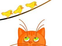 Gato e passarinhos Fotografia de Stock