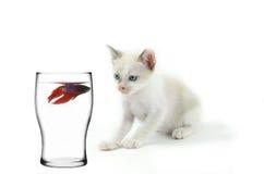 gato e peixes Imagem de Stock