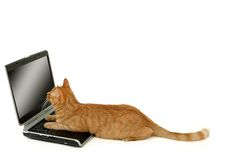 Gato e portátil foto de stock