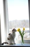 Gato e ramalhete macios brancos de tulipas amarelas das flores em um vaso de vidro em uma soleira Imagens de Stock