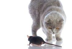 Gato e rato Imagens de Stock