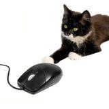 Gato e rato 3 Imagens de Stock