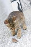 Gato e rato Imagens de Stock Royalty Free