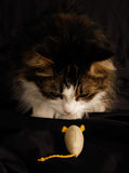 Gato e rato 2 Fotografia de Stock Royalty Free