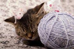 Gato e rato pequenos Imagens de Stock