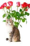 Gato e rosas Fotos de Stock Royalty Free