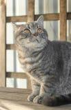 Gato e sua sombra longa em um terassa de madeira Imagem de Stock