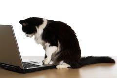 Gato e um computador Fotografia de Stock Royalty Free