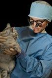 Gato e veterinário imagem de stock