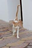 Gato egipcio Imagen de archivo libre de regalías
