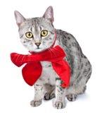 Gato egipcio lindo de Mau con el arqueamiento rojo Imagenes de archivo