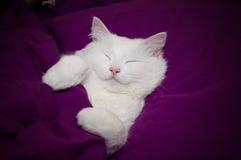 Gato el dormir Fotos de archivo libres de regalías