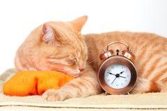 Gato el dormir. Fotografía de archivo libre de regalías