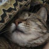 Gato el dormir Imágenes de archivo libres de regalías