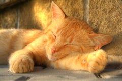 Gato el dormir del oro Imagenes de archivo