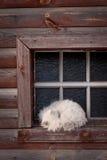 Gato el dormir en la ventana Fotografía de archivo